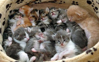 Basket_of_kittens