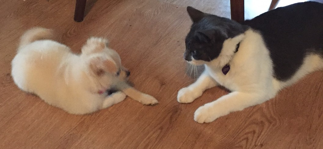 CrayC the cat and Tucker the puppy - face off