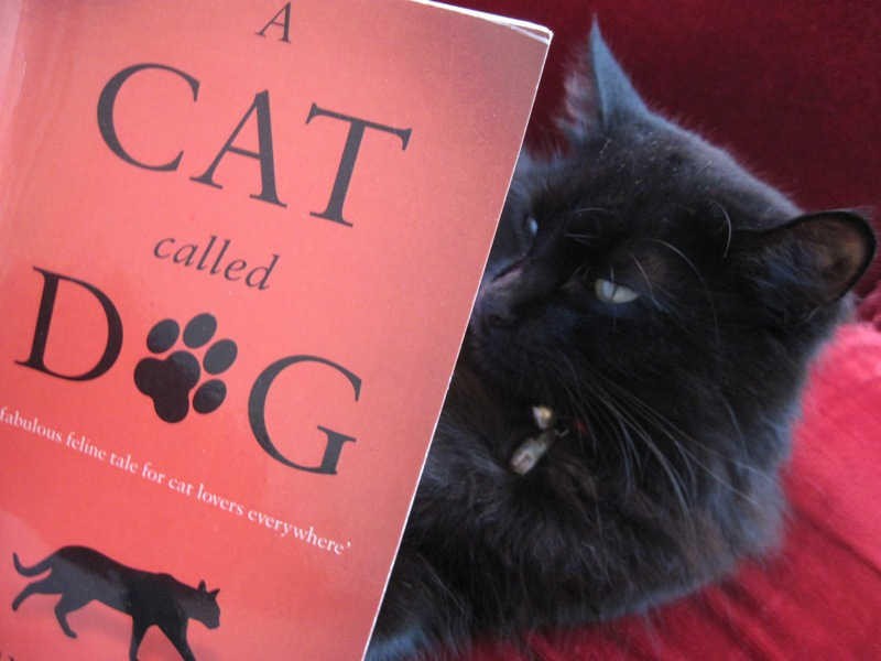 Bumble reading 'A Cat called Dog'
