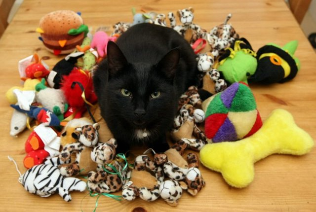 cat with lots of toys