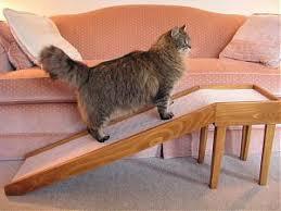 Aid to help a cat climb up onto a sofa
