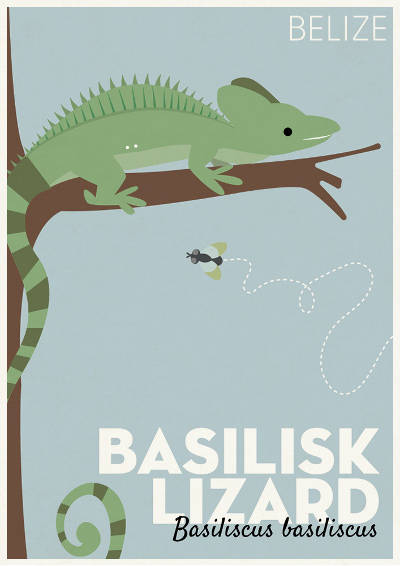 Basilisk Lizard of Belize