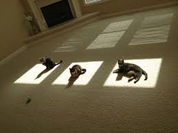 cats in sun puddless
