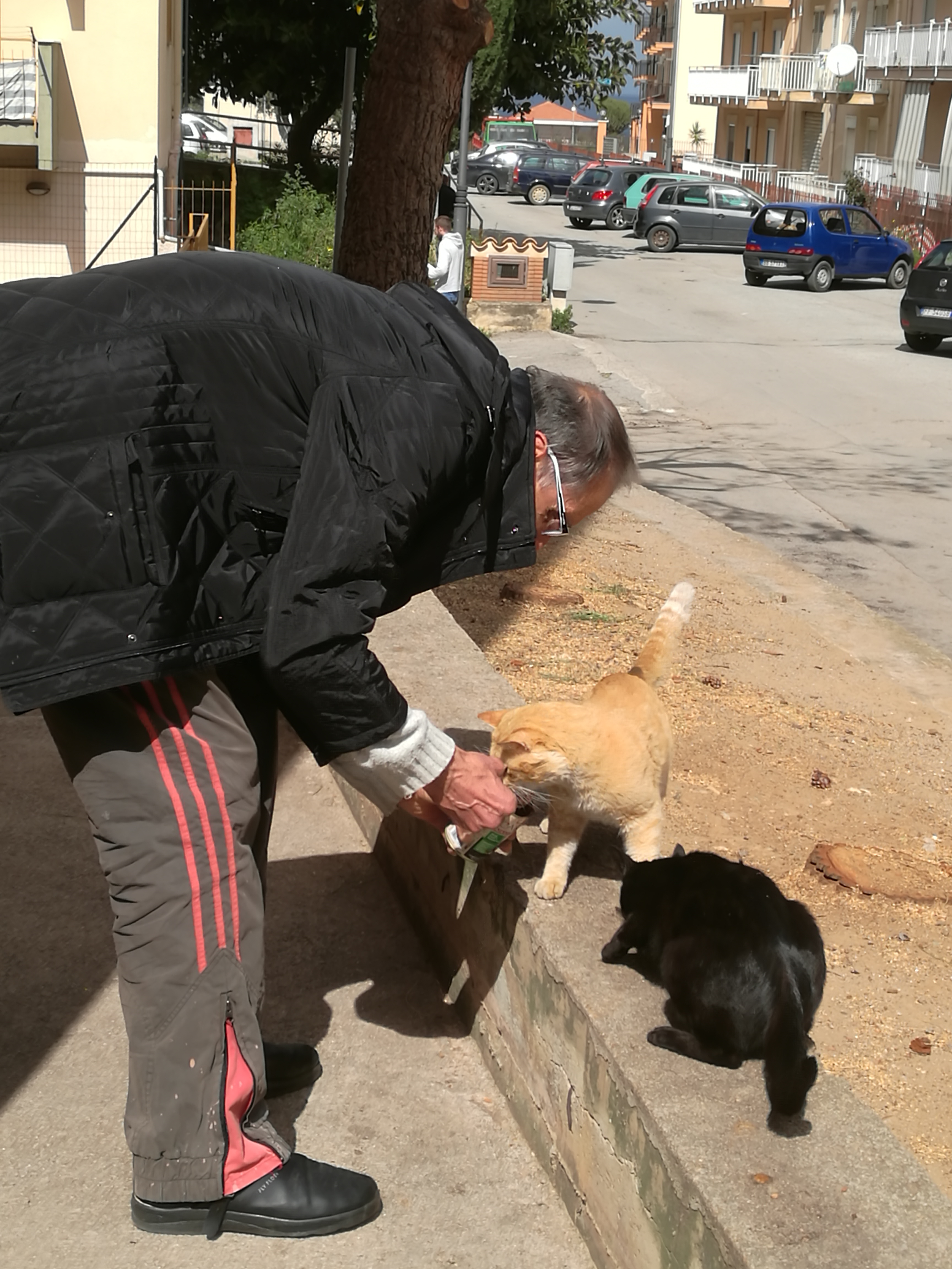 Salvatore feeding two strays in Palermo