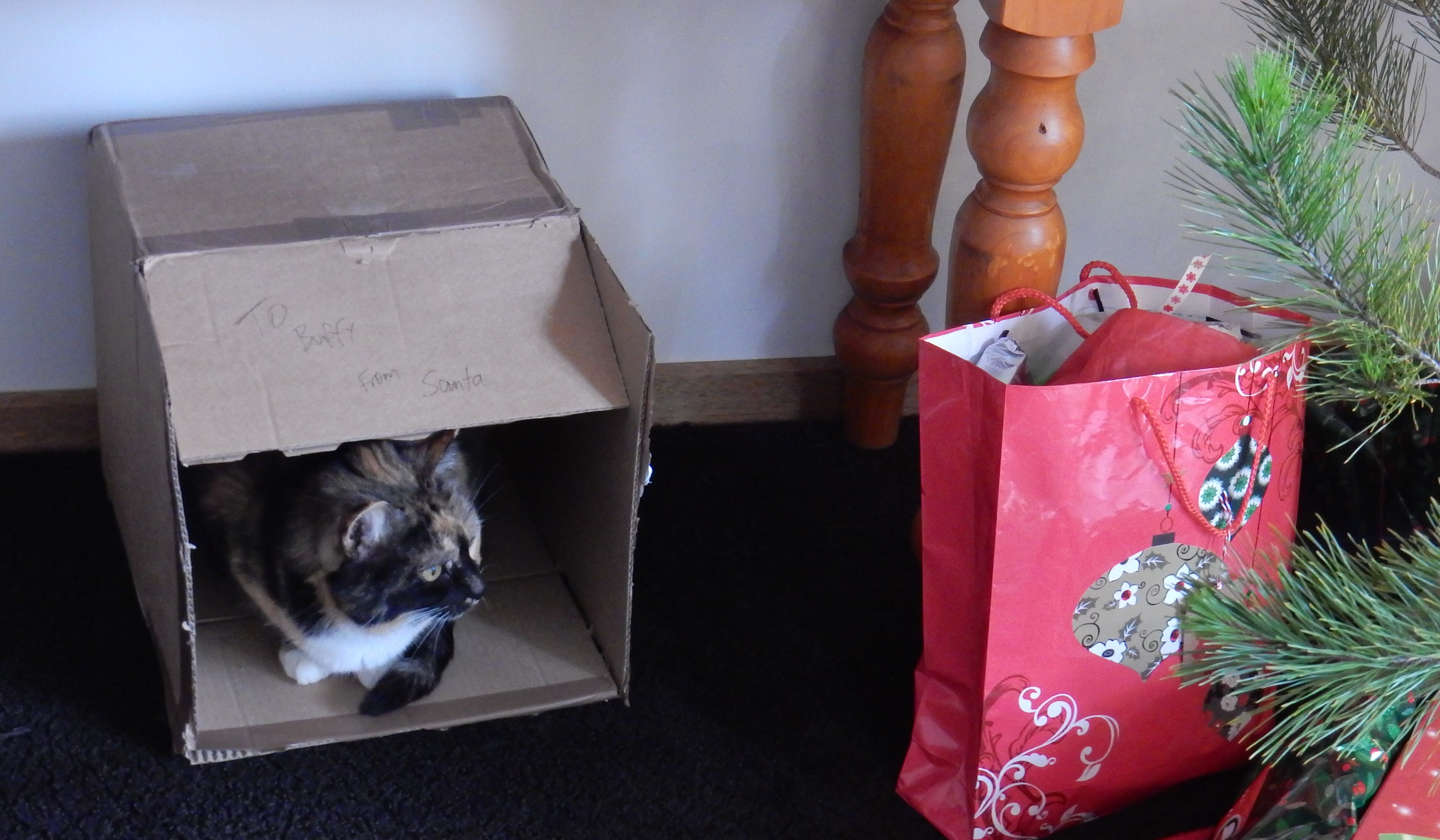 Buffy and her Christmas box