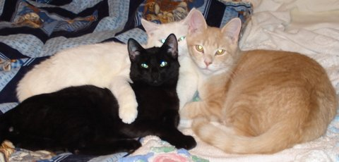 Squirt, Sugar and Ringo