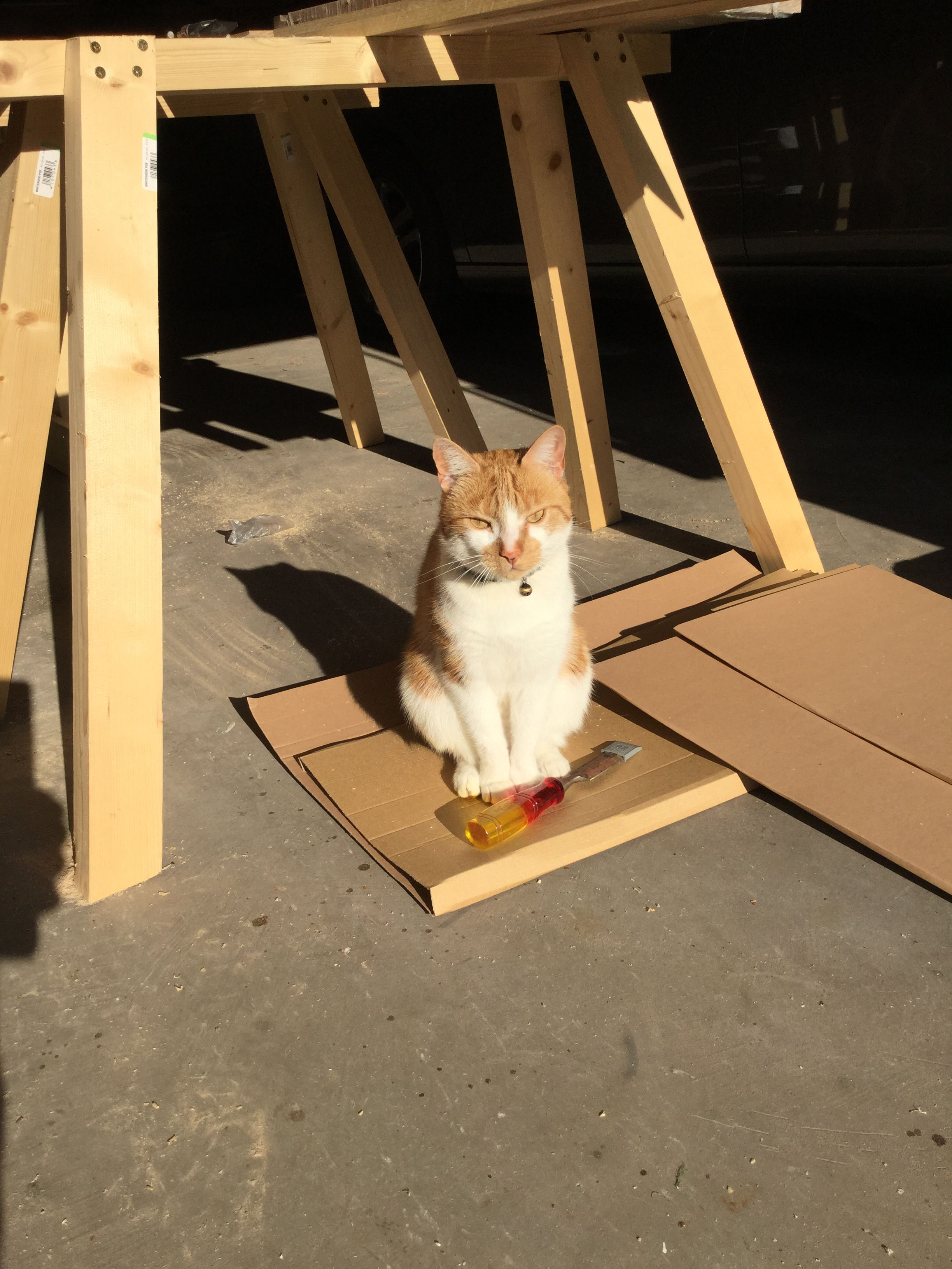Bilbo in training to be a carpenter