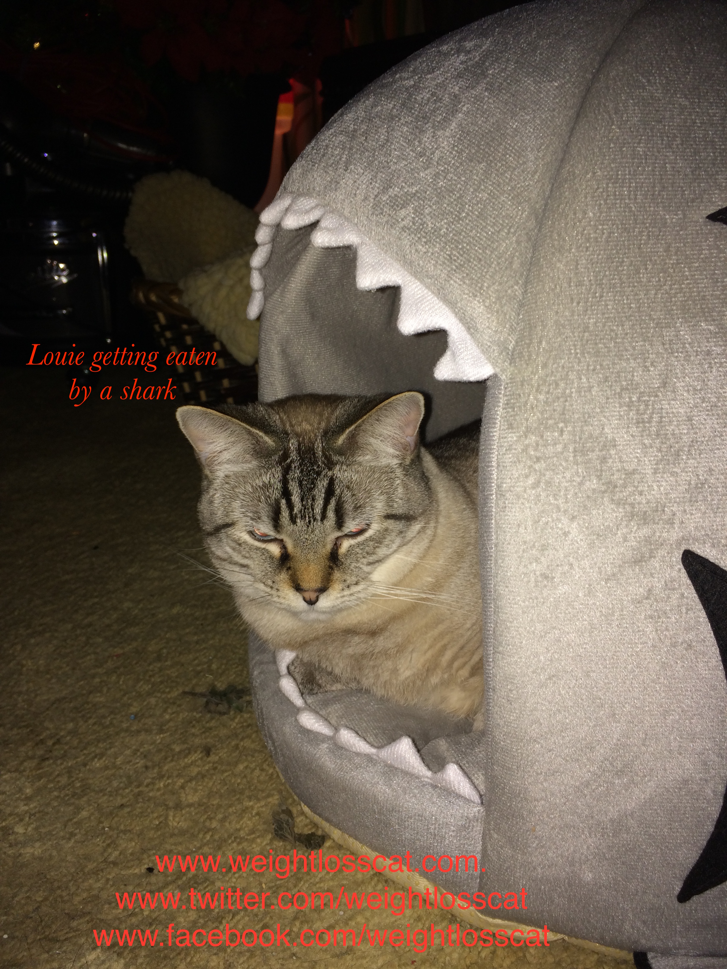 Louie getting eaten by a shark