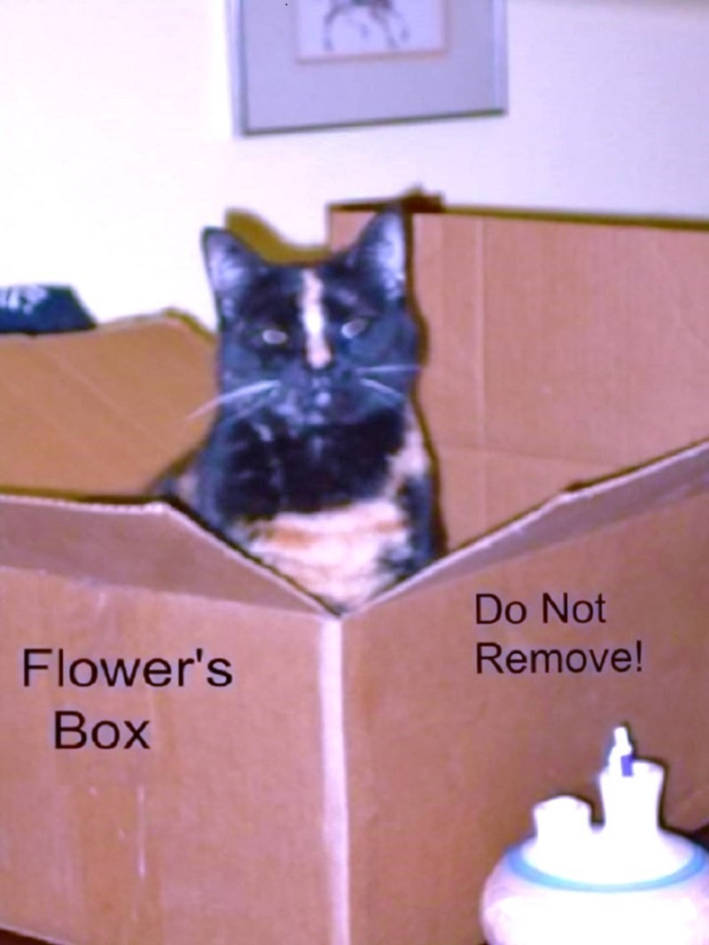 Flower in her box