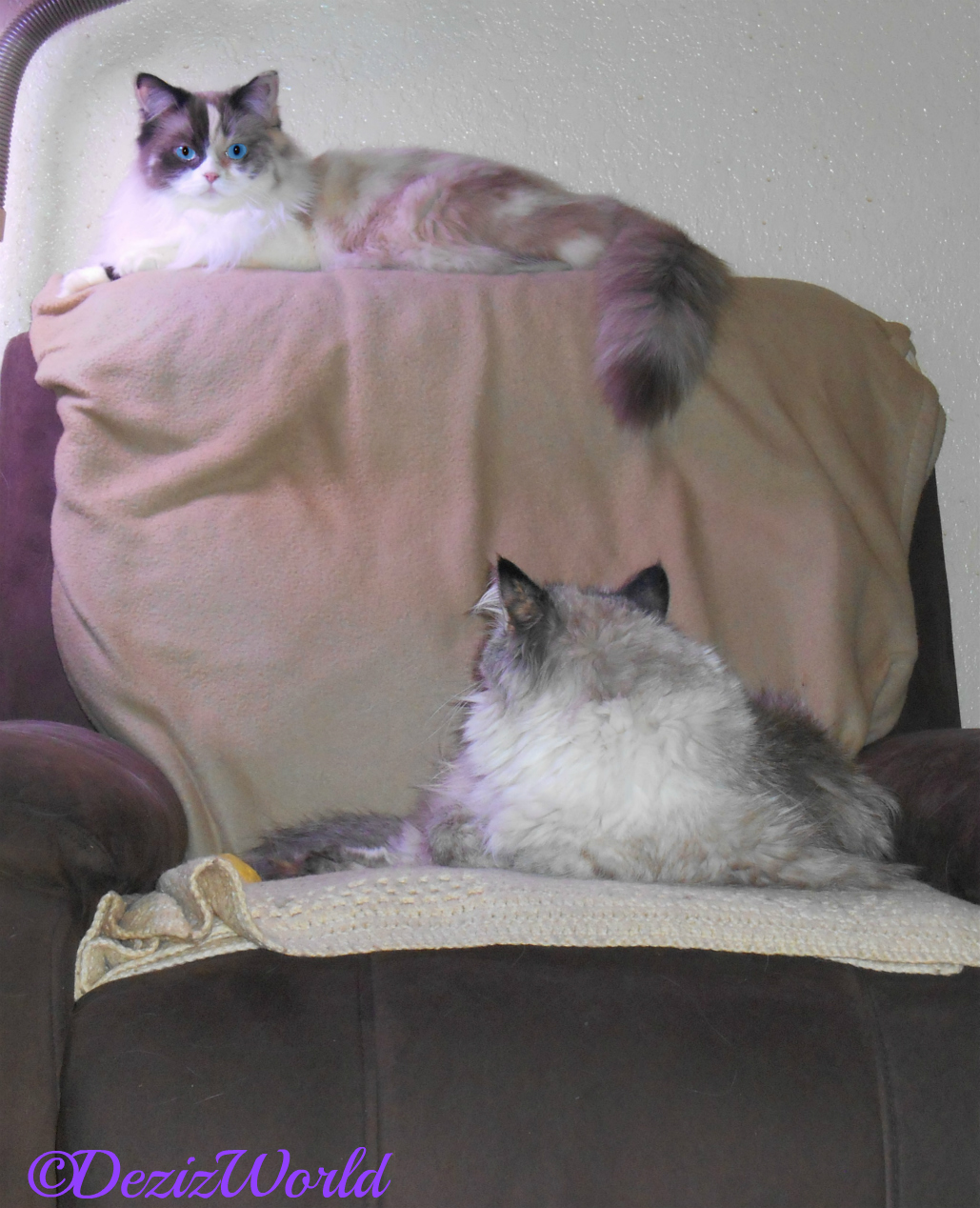 Dezi and Raena in chair