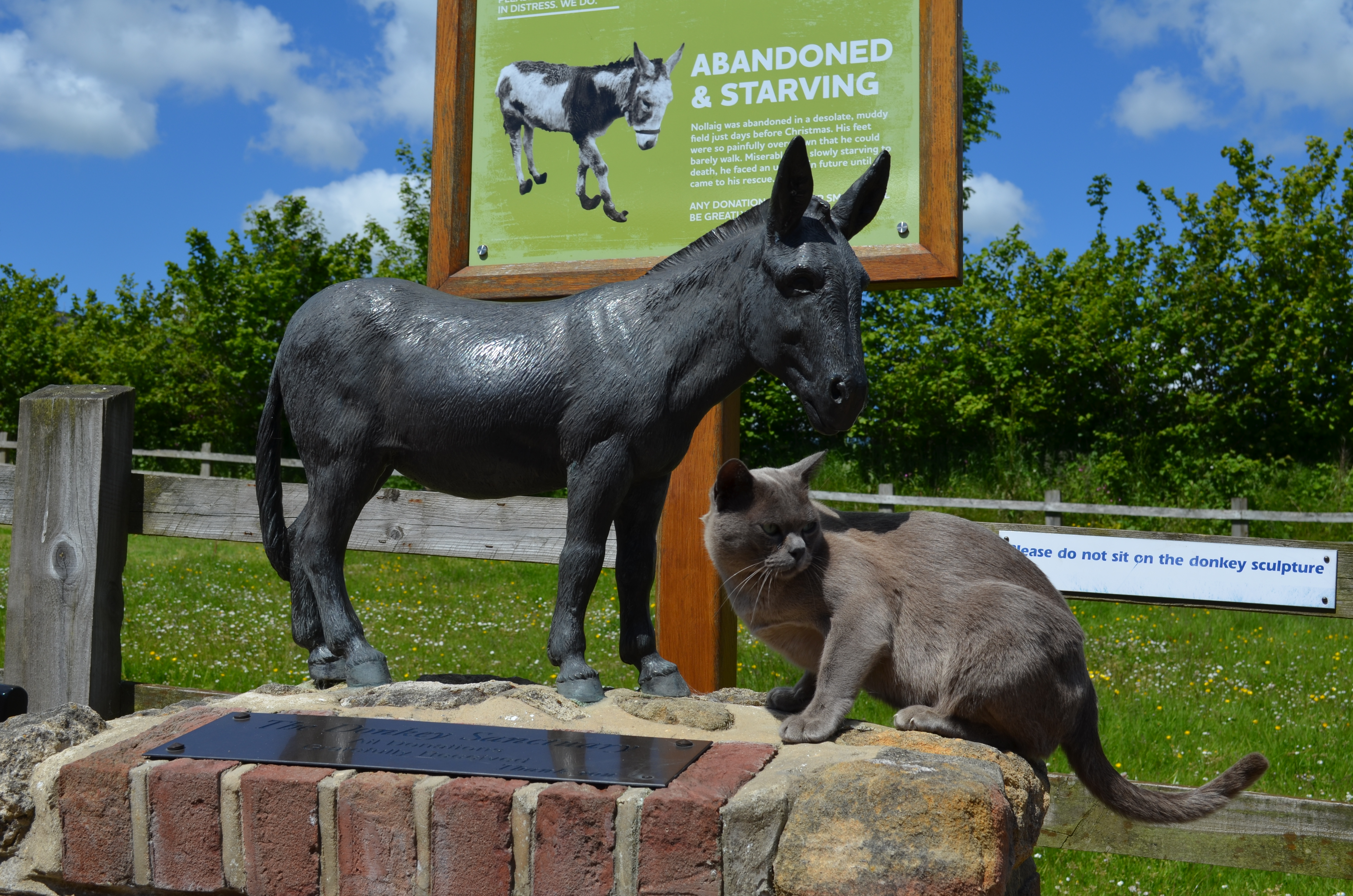 Beau and the Donkey Sanctuary sign