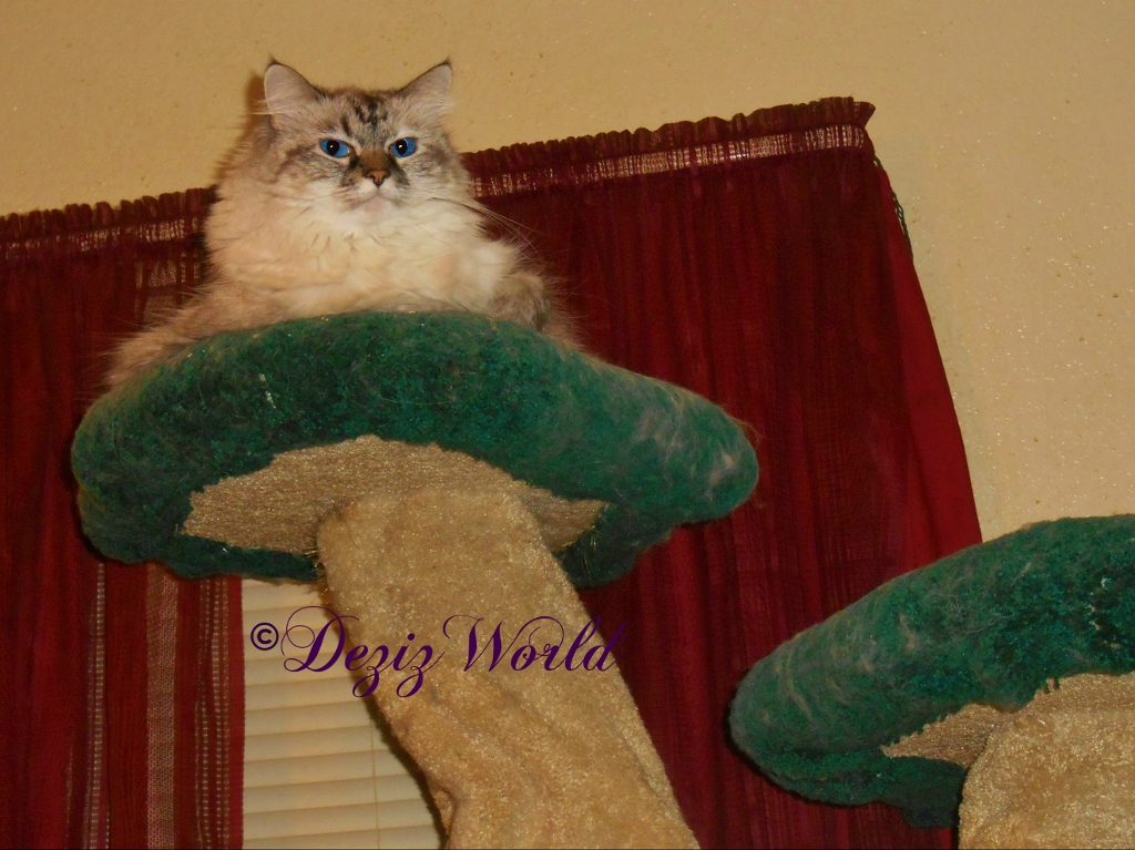 Dezi in her tree top