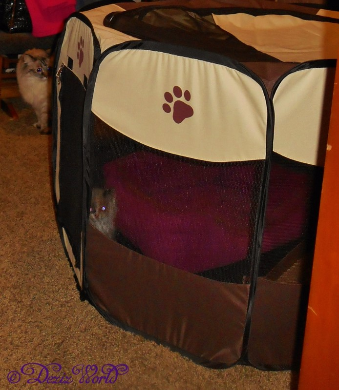 Raena in travel carrier