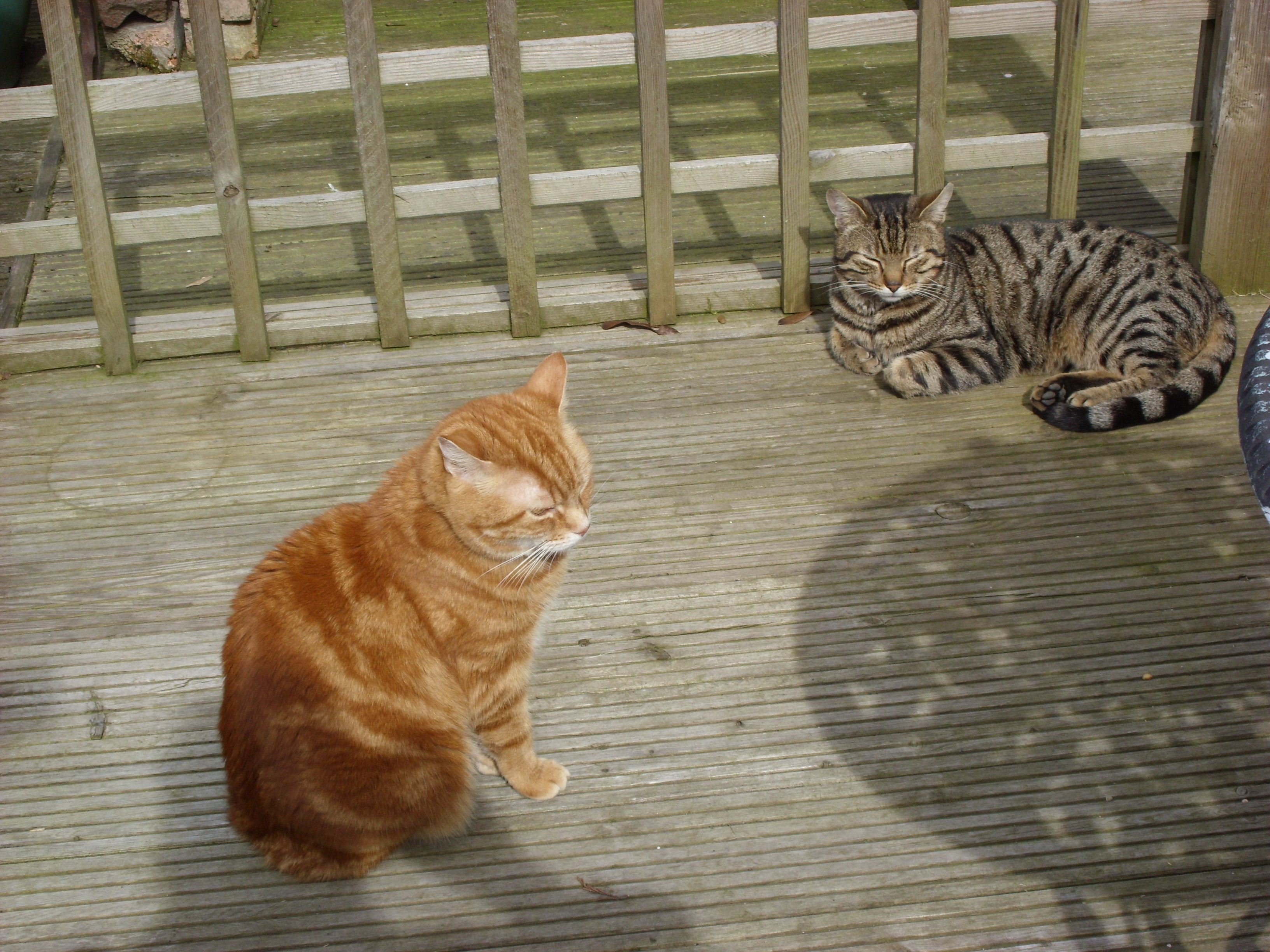 Ollie and Casey on the decking